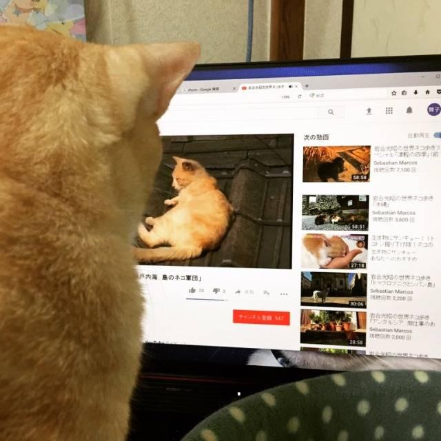 猫フォトジェニックなユーザー【ほしみん】さんをご紹介!