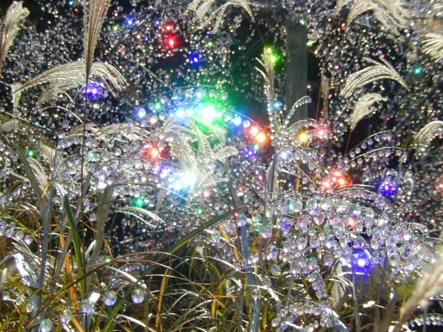 ガラスの森美術館の庭園で輝くクリスタルガラス