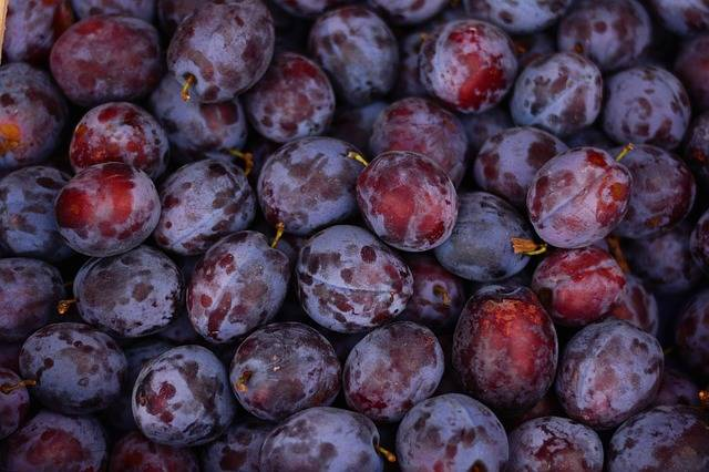 Free photo: Plums, Fruit, Ripe, Violet, Fruits - Free Image on Pixabay - 2724160 (598)