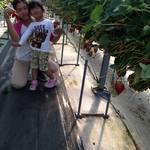 静岡産いちごへのこだわりと、いちご作りの裏側をあなたへ。いちごらんど中西 中西勝威さん