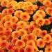 【2019年春夏】オレンジカラーのネイルデザイン50選!気分が上がるオレンジネイル特集