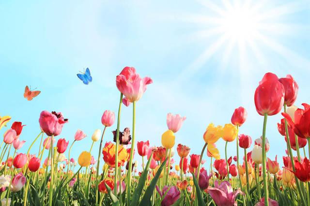 待ち遠しかった春!楽しみながらできるストレス解消法3つ!|Kurera[クレラ] (14367)