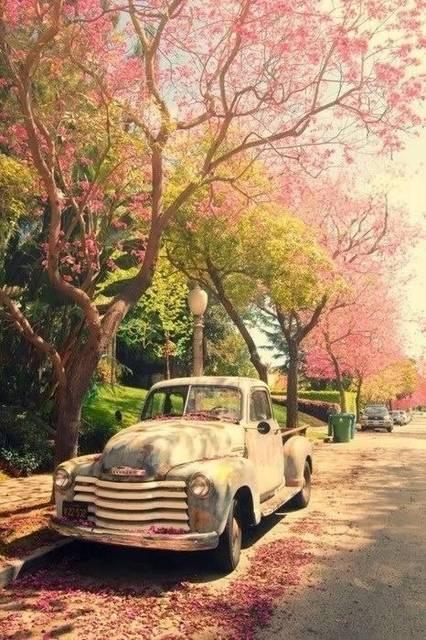 Color palette // Spring edition | Spring | Vintage Cars, Cool trucks, Old trucks (38355)