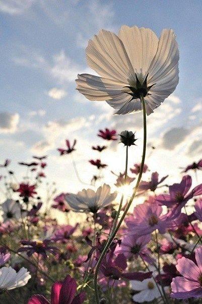 Heaven on Earth | Flower | Wonderful flowers, Flowers, Flower photos (38358)