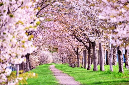 春♡桜♡桜フェアー!!|ぶんぶんファミリーブログ|はちみつ専門店 長坂養蜂場 (38439)