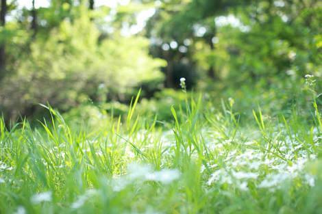 草原に迷い込んだ小人|無料の写真素材はフリー素材のぱくたそ (39172)