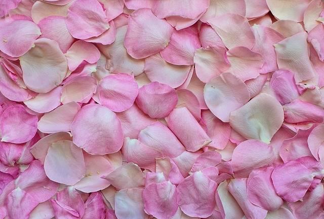 Rose Petals Pink Background - Free photo on Pixabay (30004)