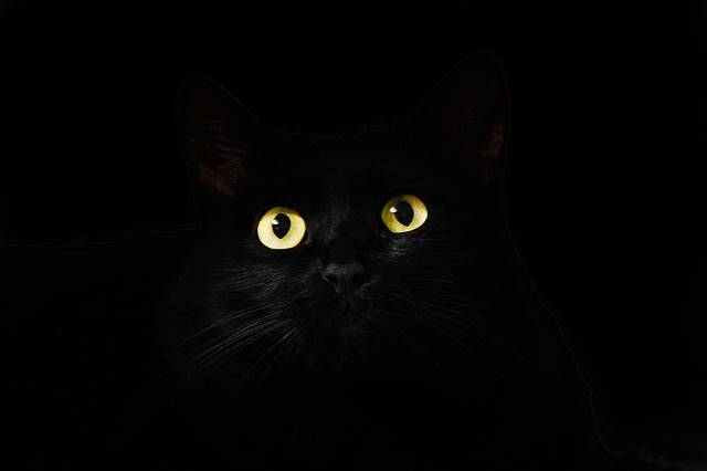 Cat Eyes Black - Free photo on Pixabay (30990)