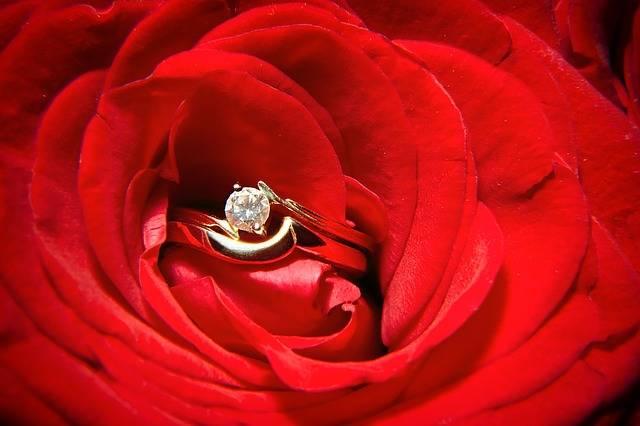 Red Rose Flower - Free photo on Pixabay (34330)