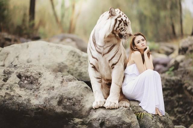 Nature Animal World White Bengal - Free photo on Pixabay (36615)