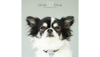 顔バレ上等!大塚 愛の愛犬がリメイクアルバム『犬塚 愛 One on One Collaboration』のジャケット写真に!