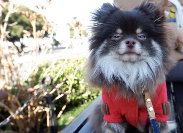 【週末お出かけ】犬同伴OKな横浜のおすすめスポット