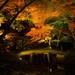 一見の価値あり!イルミネーションより美しい【六義園】「紅葉と大名庭園のライトアップ」を開催中!   withonline - 講談社公式 -