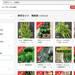 メルカリ「野菜セット 無農薬」で検索