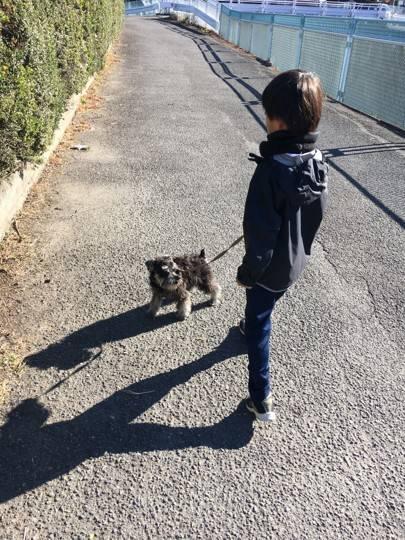 ルークの散歩