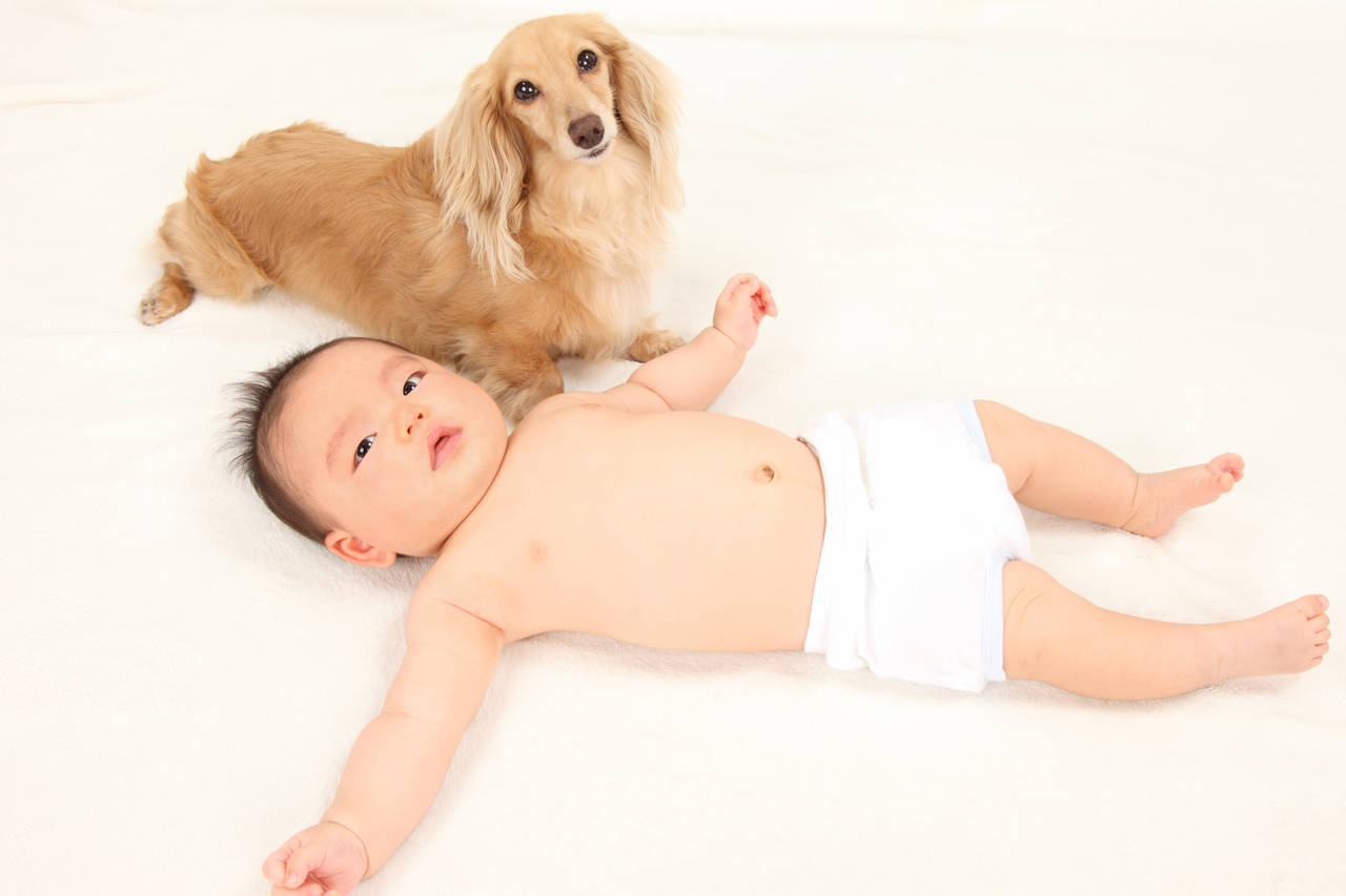 乳児とペットが快適に暮らすには?同居の注意点と飼育のコツ