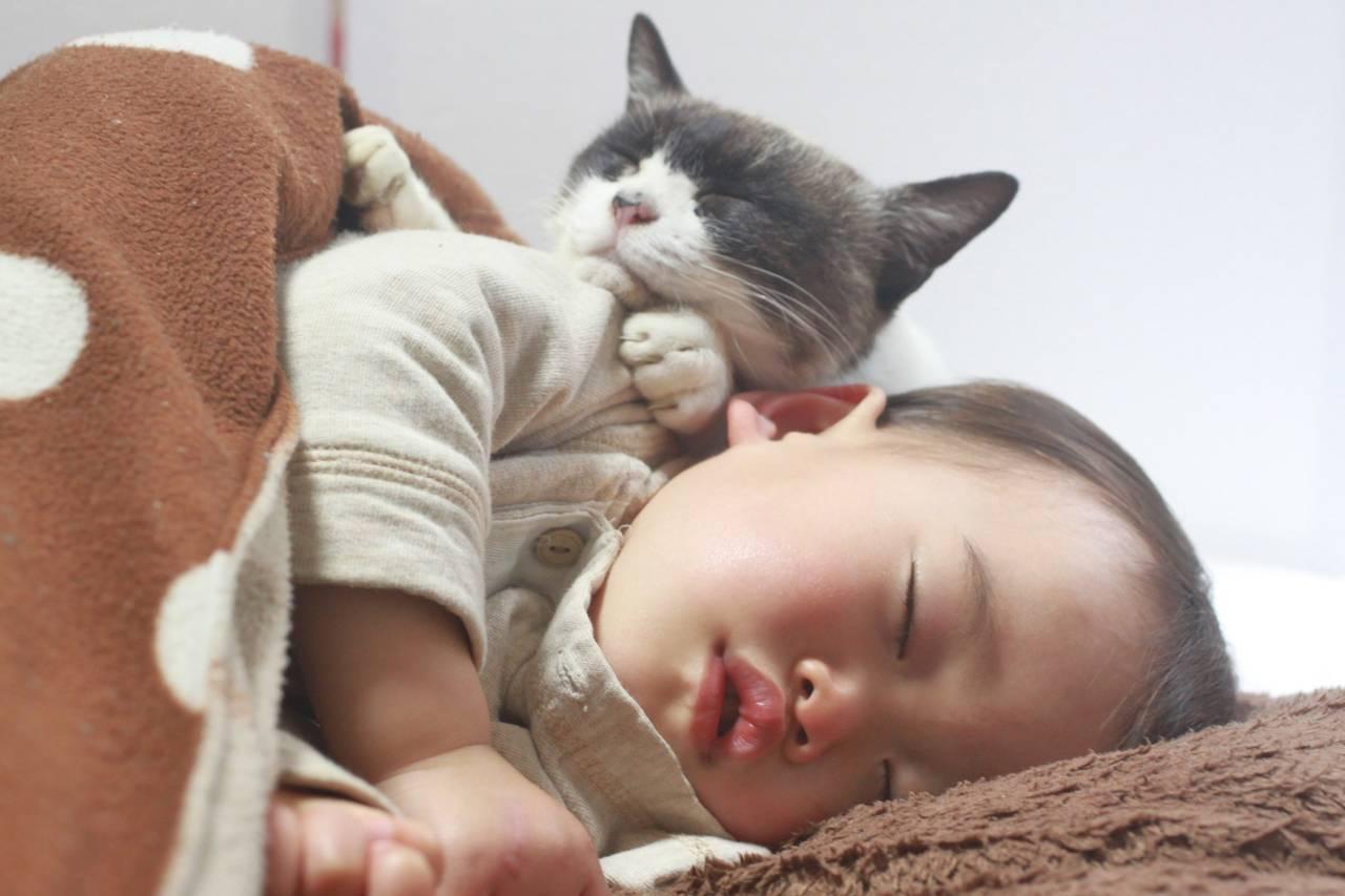 乳児と猫は同居しても大丈夫?病気のことや同居の注意点