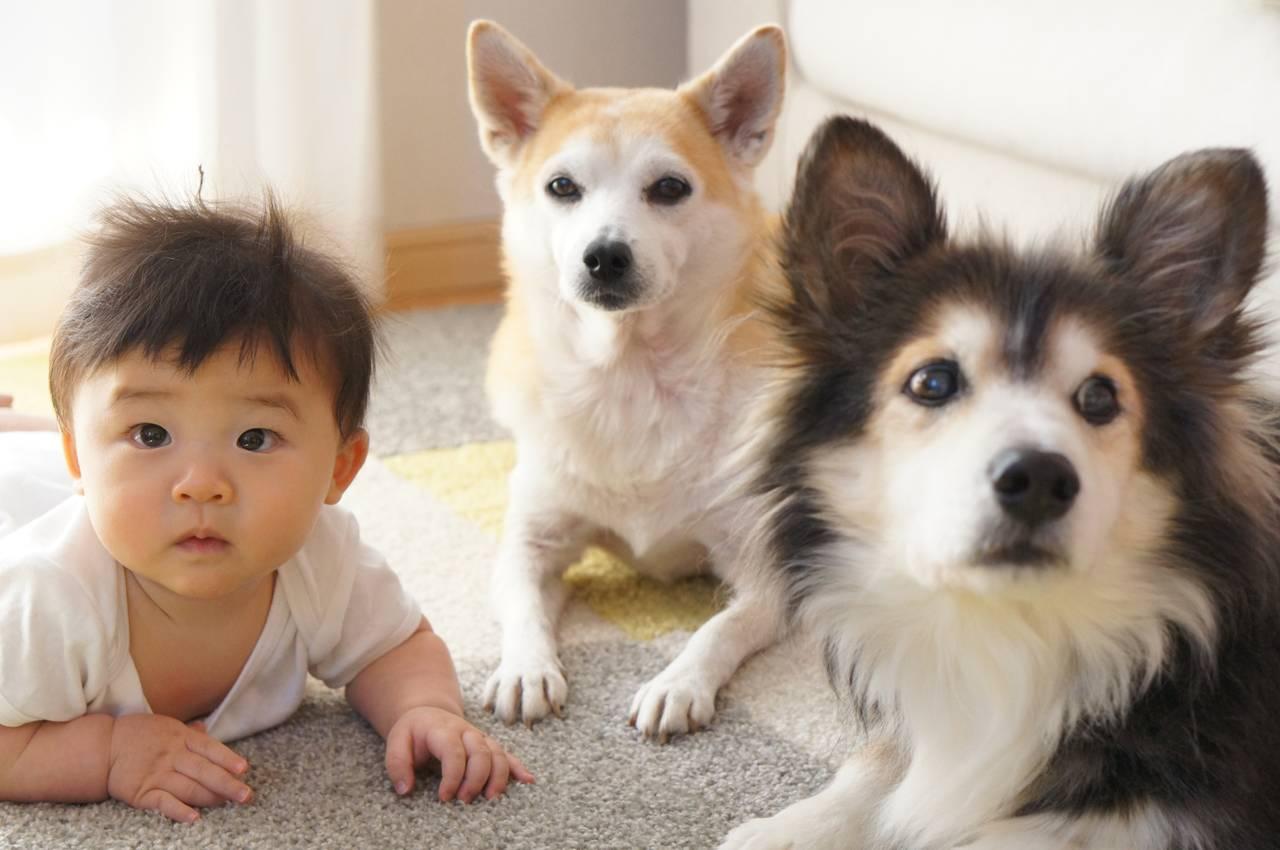 新生児と犬は一緒に生活できる?知っておきたいポイントや注意点