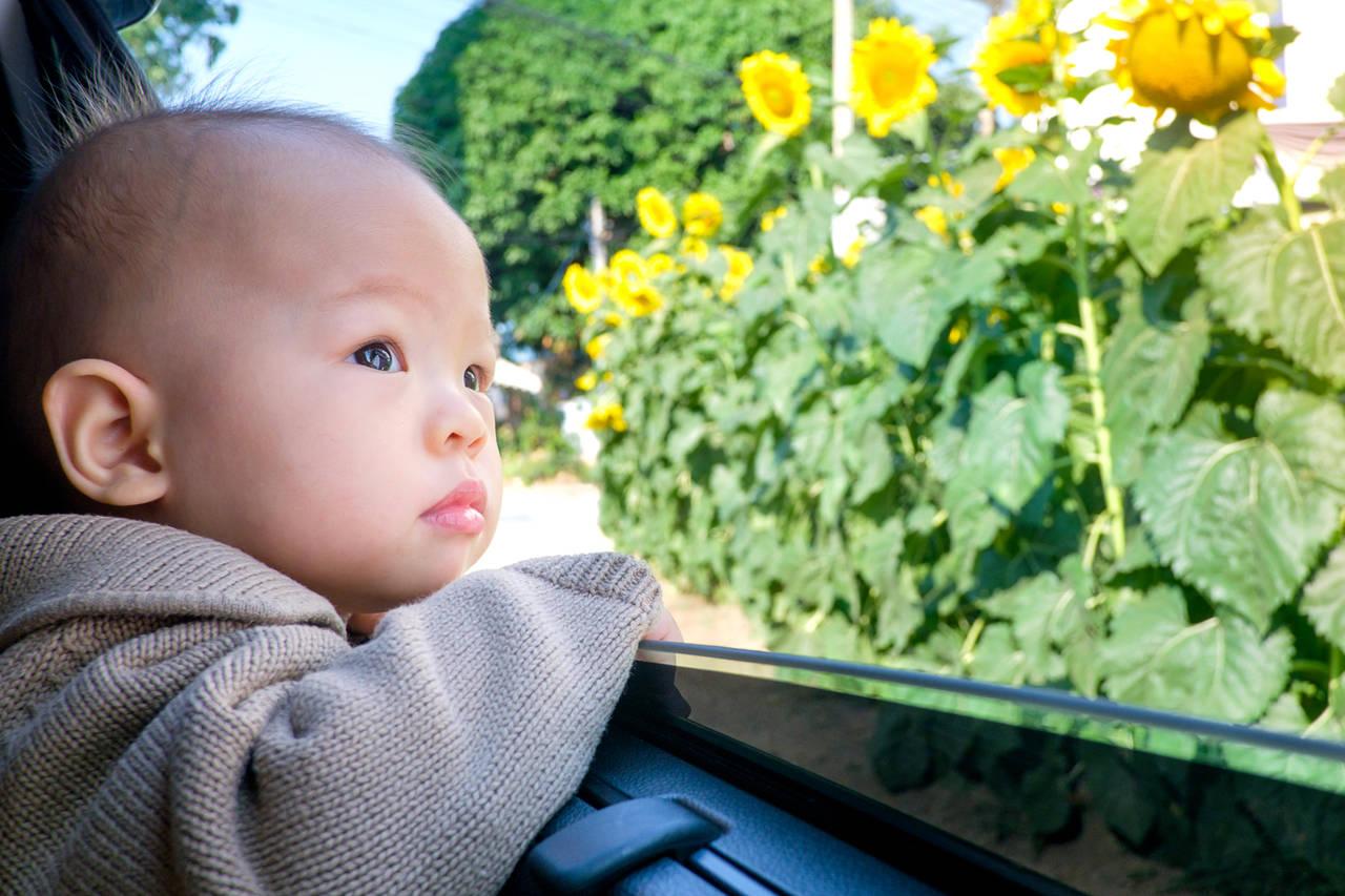 子連れでドライブを楽しもう!ドライブを楽しむコツや車酔いの対策