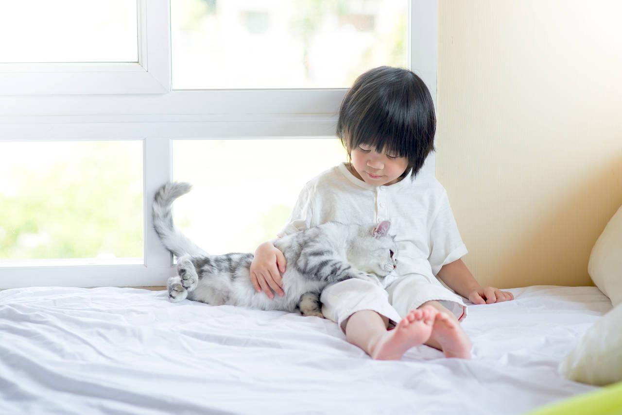 子育てしながら猫が飼いたい。夫婦で協力してお世話をするコツ