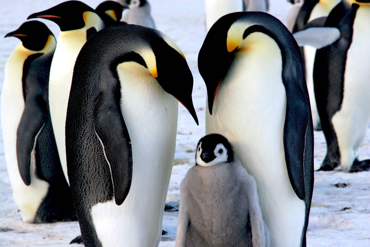 動物も夫婦一緒に子育てするの?動物からみる子育ての在り方