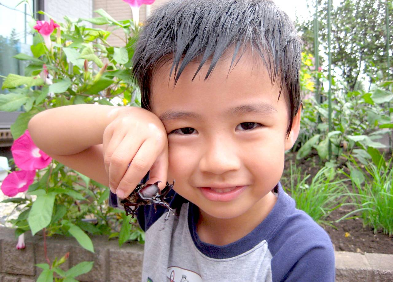 夏はカブトムシを飼おう!迎える準備と子どもがお世話できる方法