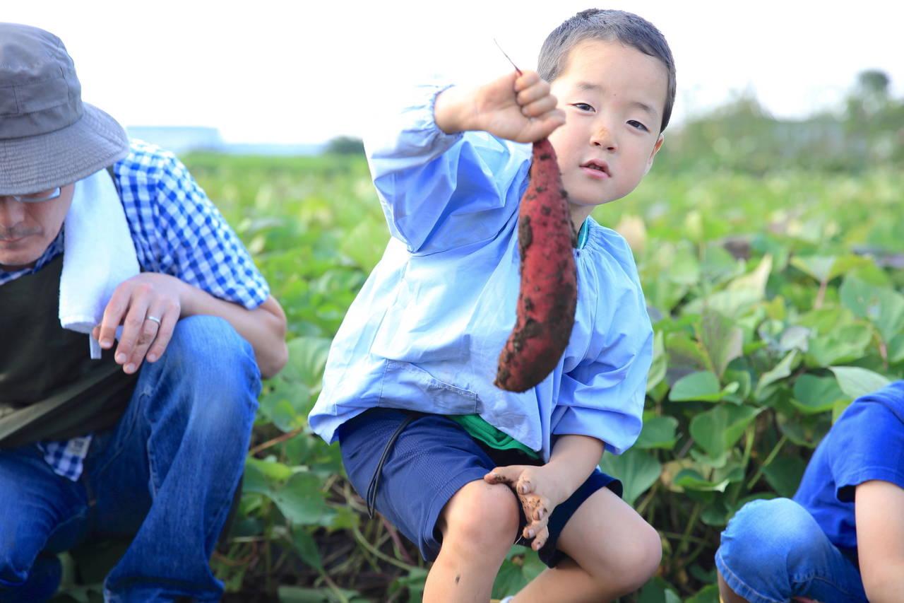 幼稚園の芋掘りのねらいを知ろう!適した服装や他園の芋掘りを紹介