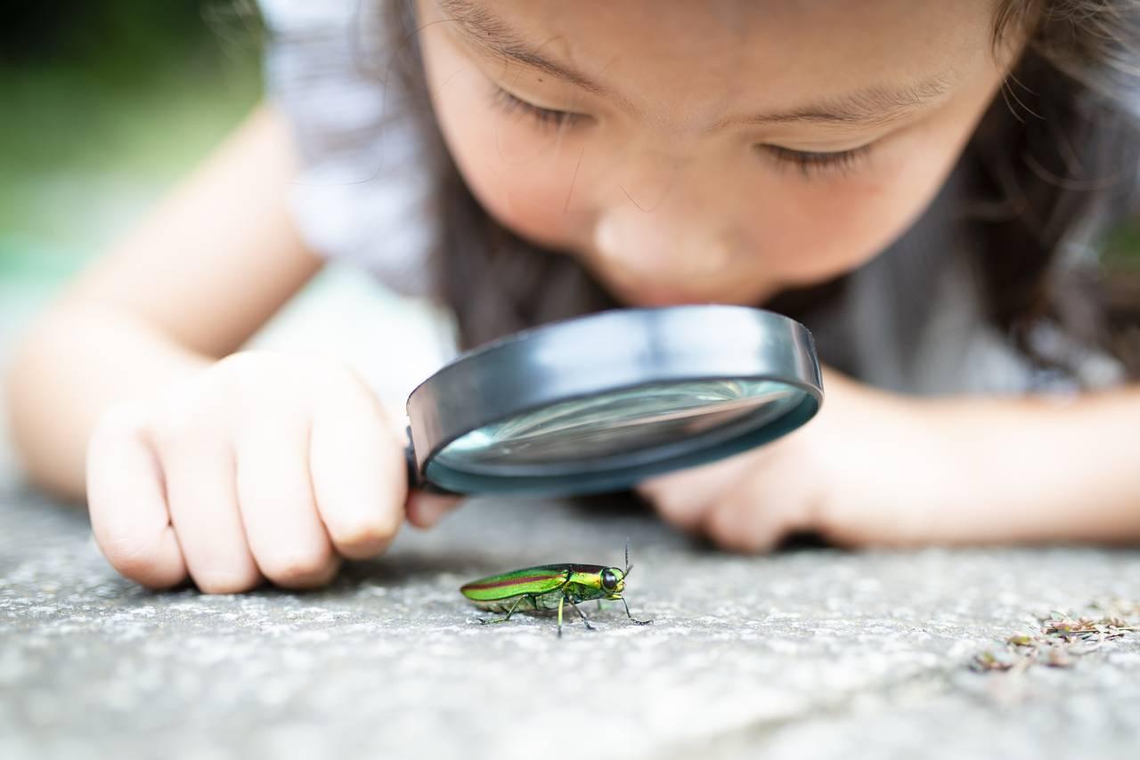 幼児期の自然体験が子どもを強くする!おすすめの自然体験や場所