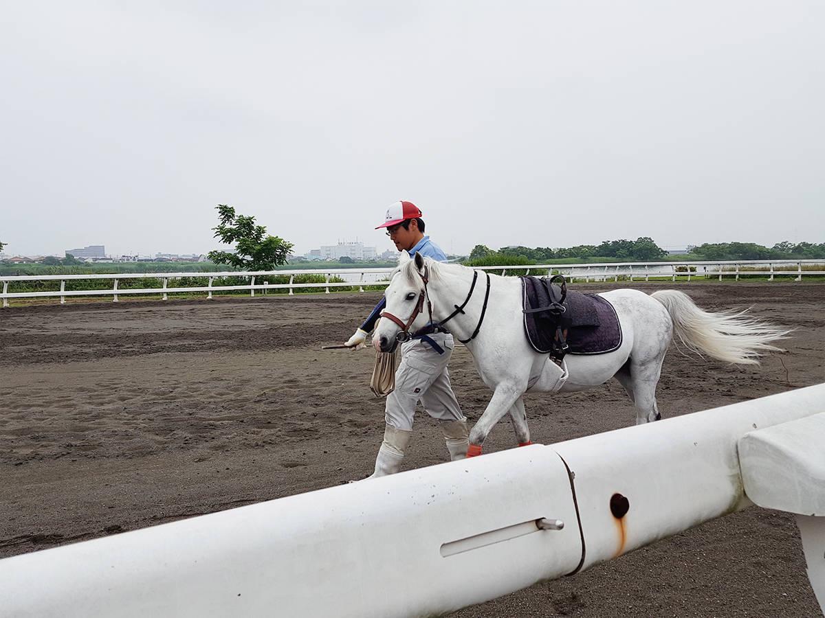 【東京・江戸川区】無料で乗馬体験ができる「篠崎ポニーランド」