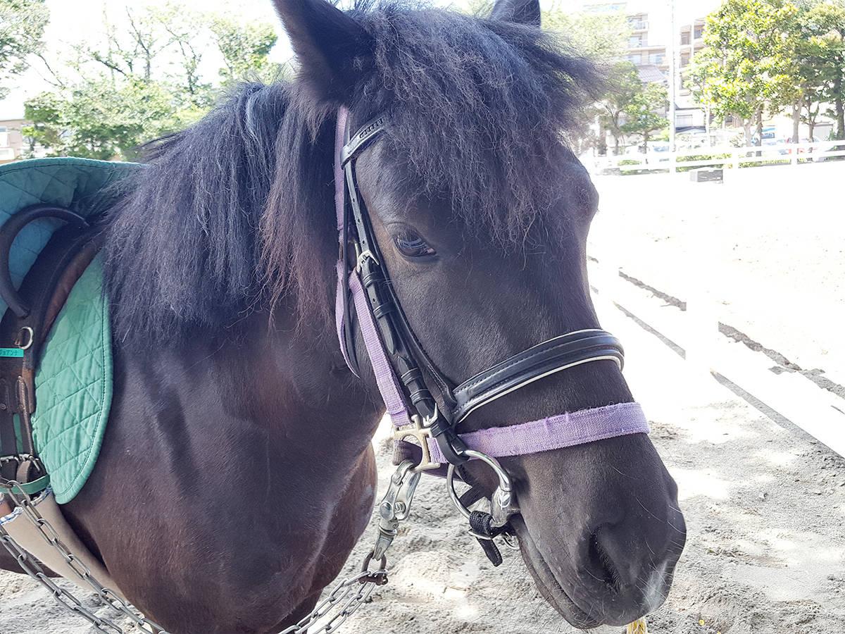 【東京・葛飾区】無料でポニー乗馬!「水元スポーツセンター公園」