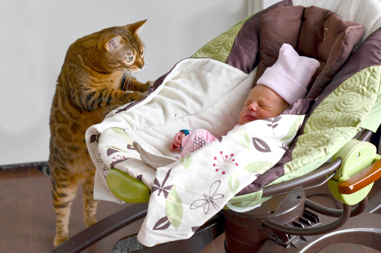 猫と新生児の同居について。注意したいことや環境の作り方を紹介