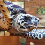 【仙台】空を飛ぶカメ!?のいる爬虫類カフェ「ジュラの杜」