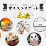 【仙台】市内でかわいい動物とふれあえる!おすすめスポット4選