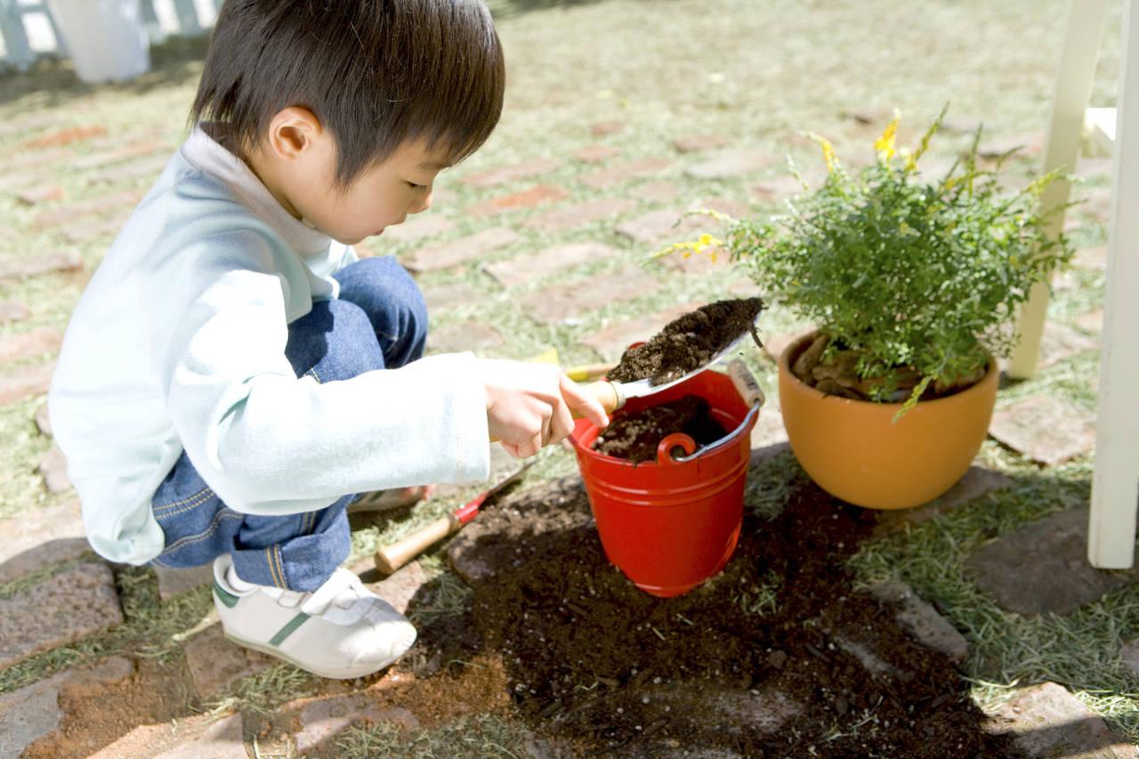家庭菜園でハーブを楽しもう!おすすめハーブ、育て方、活用法