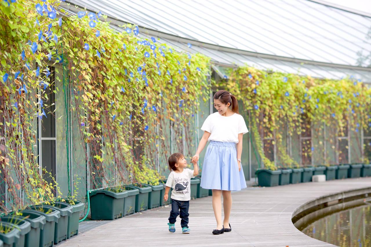 幼児のお散歩には素晴らしい効果が!親子で散歩を楽しもう