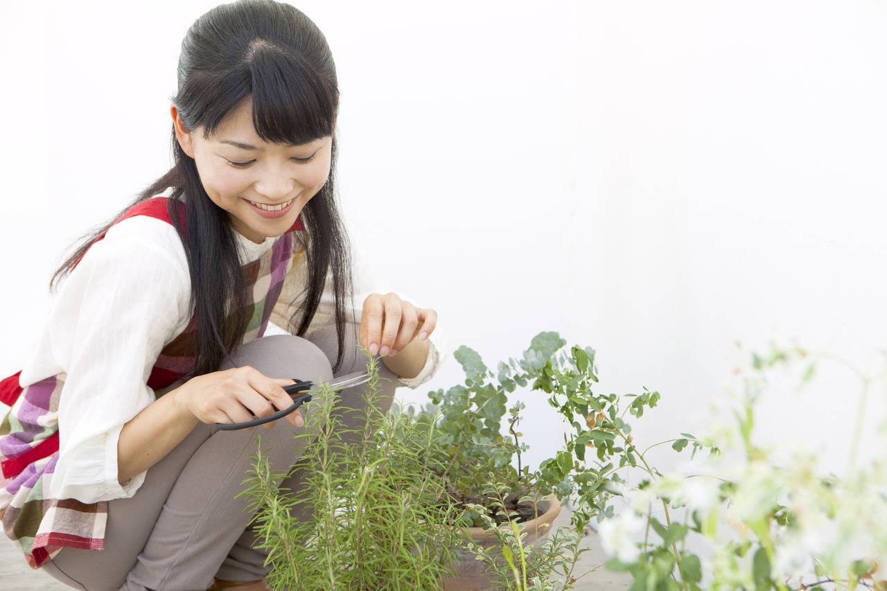 家庭菜園初心者はプランター菜園から!はじめ方や作りやすい野菜