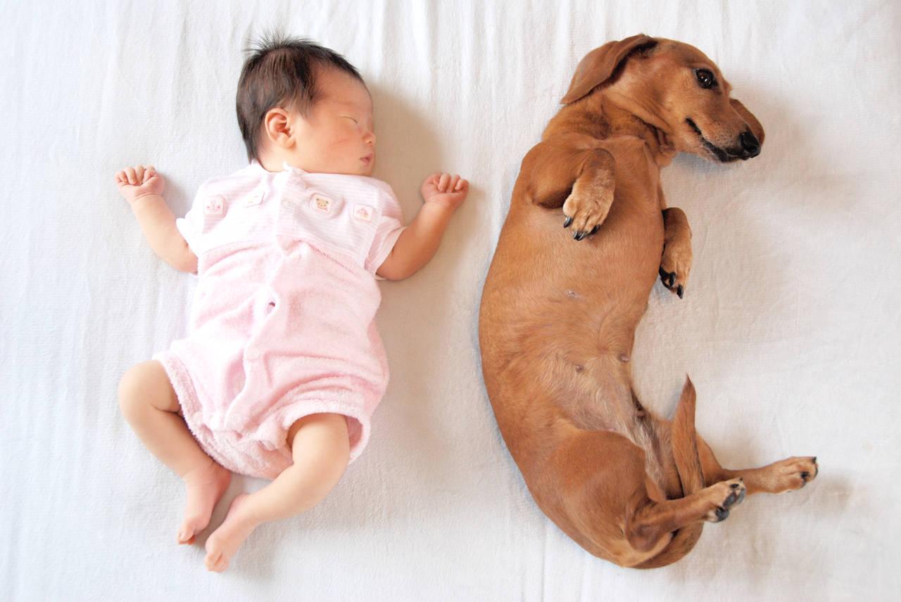 新生児とペットの同居は幸せがいっぱい!メリットと一緒に暮らすコツ