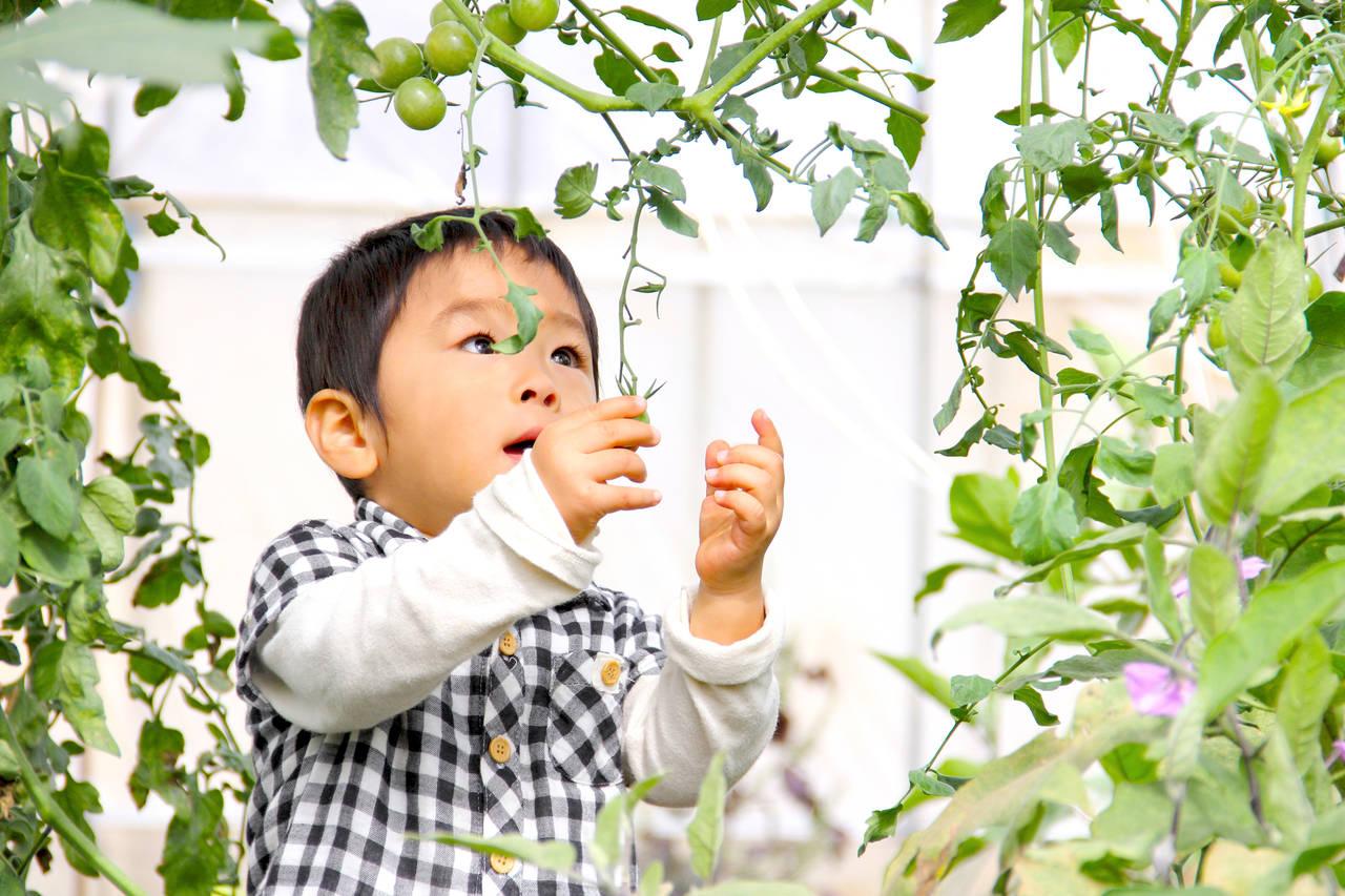 家庭菜園でミニトマトを育てよう!育て方やコツ、トラブル対処法