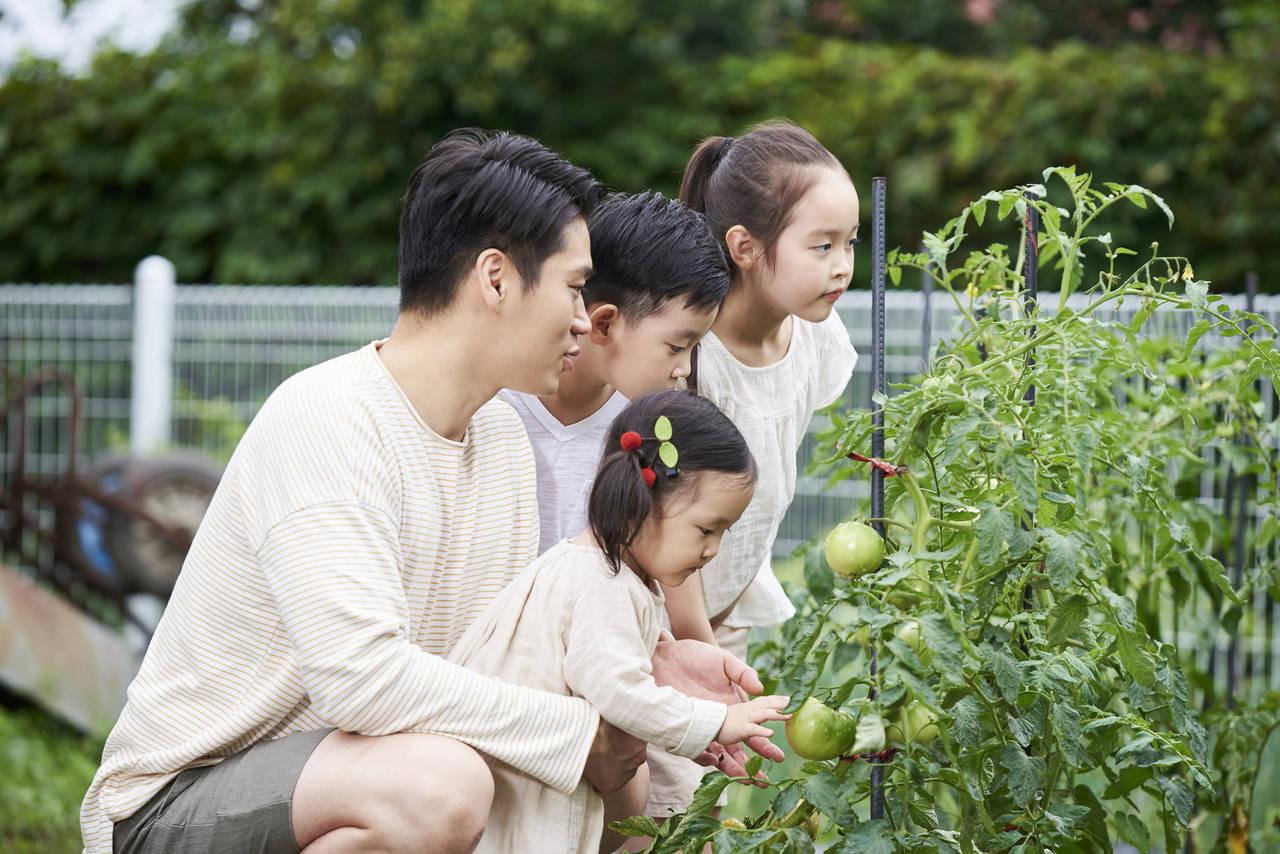 花壇を作って家庭菜園を充実させよう!自分でも本格的に作れるやり方