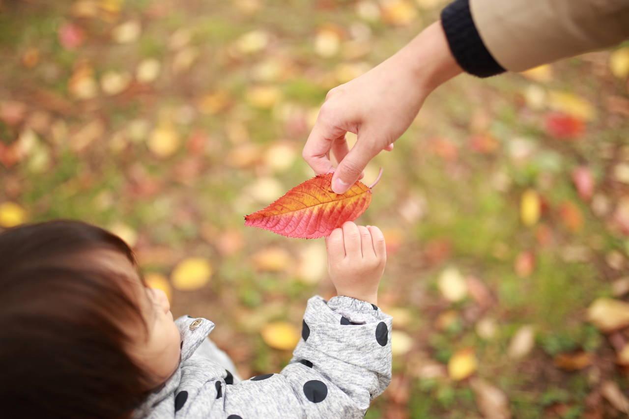 赤ちゃんの乾燥が始まる秋到来!デリケートな肌をしっかり守ろう