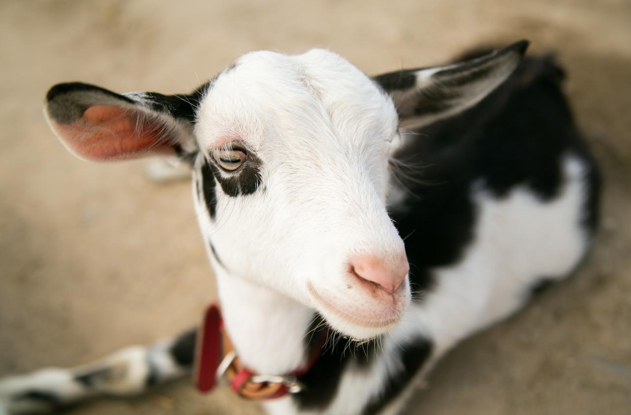 【愛知】小さな動物とのふれあいが人気!「愛知牧場」