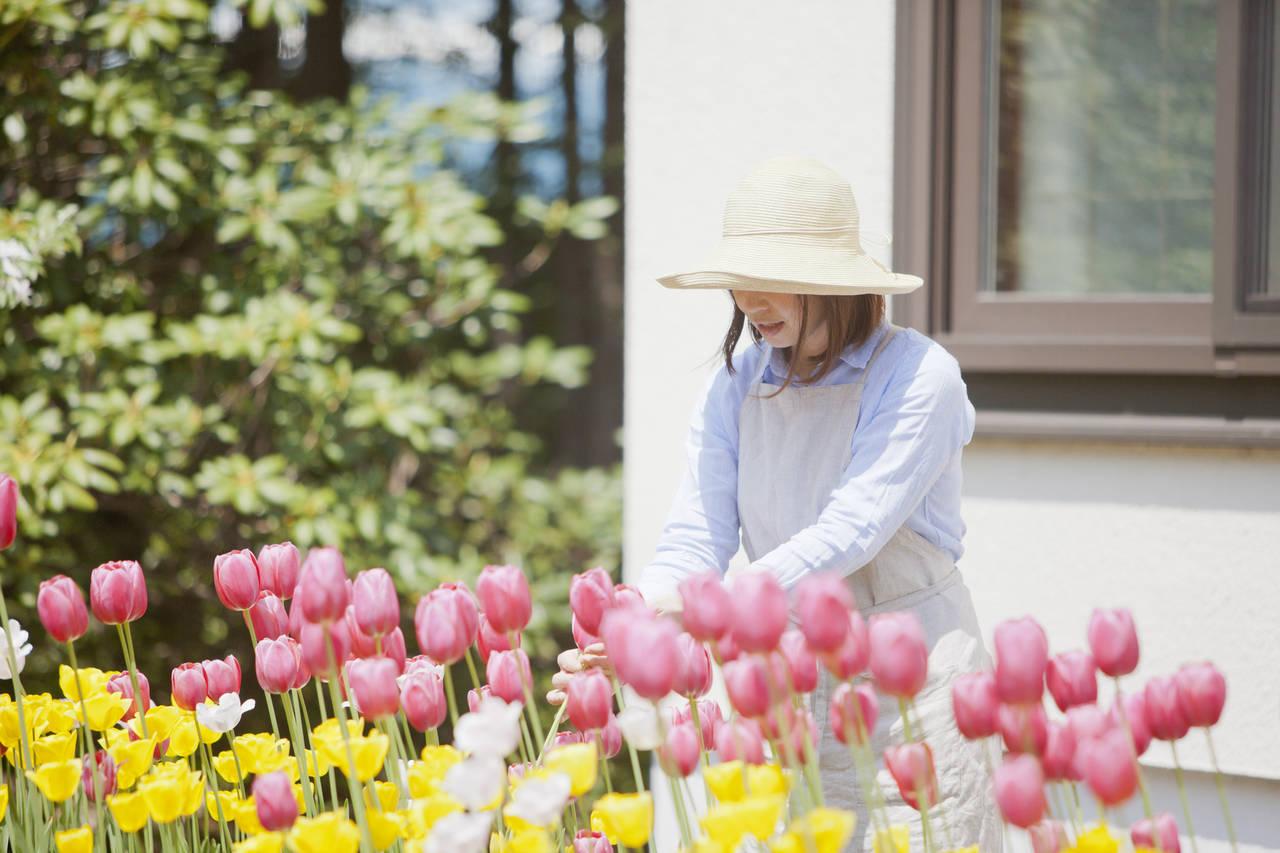 ガーデニングで草花を植えよう!季節別おすすめ草花、お手入れ方法