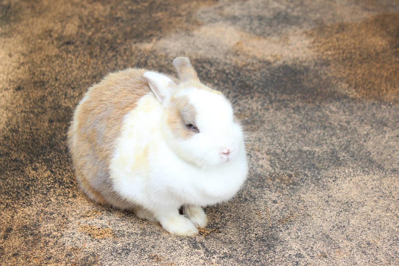 【大阪】可愛い動物とふれあって楽しめる場所「五月山動物園」