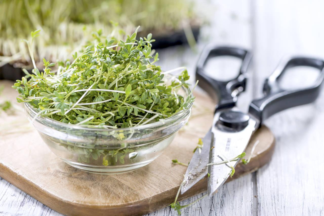 水耕栽培で簡単に野菜を作ろう!手軽に始められる野菜や栽培方法