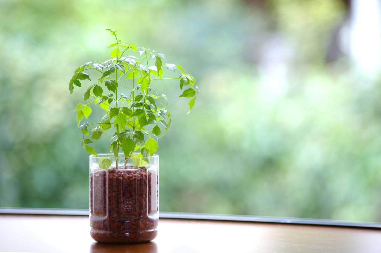 ペットボトルで水耕栽培!作り方や始める前に知っておきたいポイント