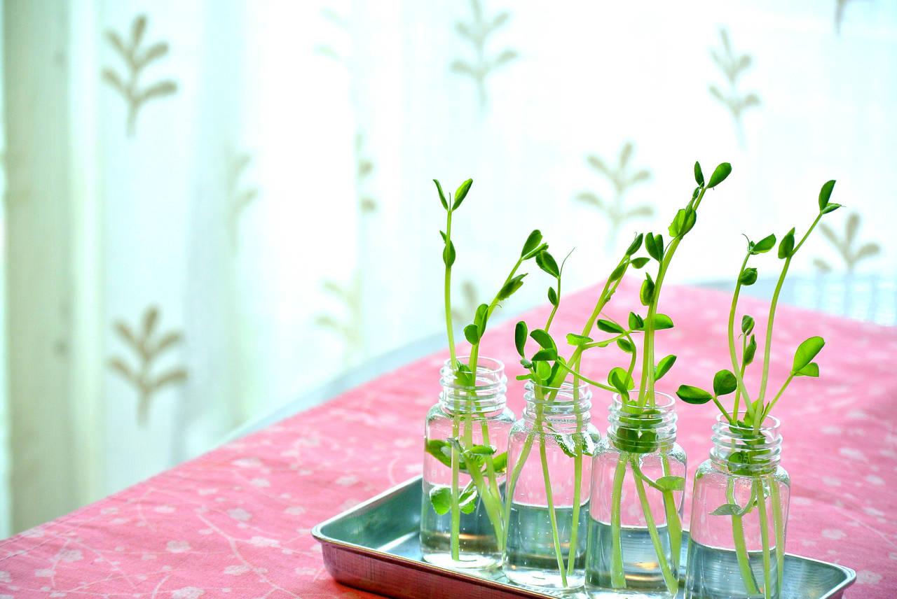水耕栽培で重要となる肥料を買おう!正しい使用方法や注意点