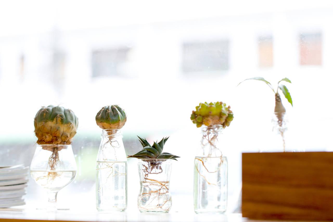 水耕栽培をはじめよう!ジャンル別にいろいろな植物の育て方をご紹介