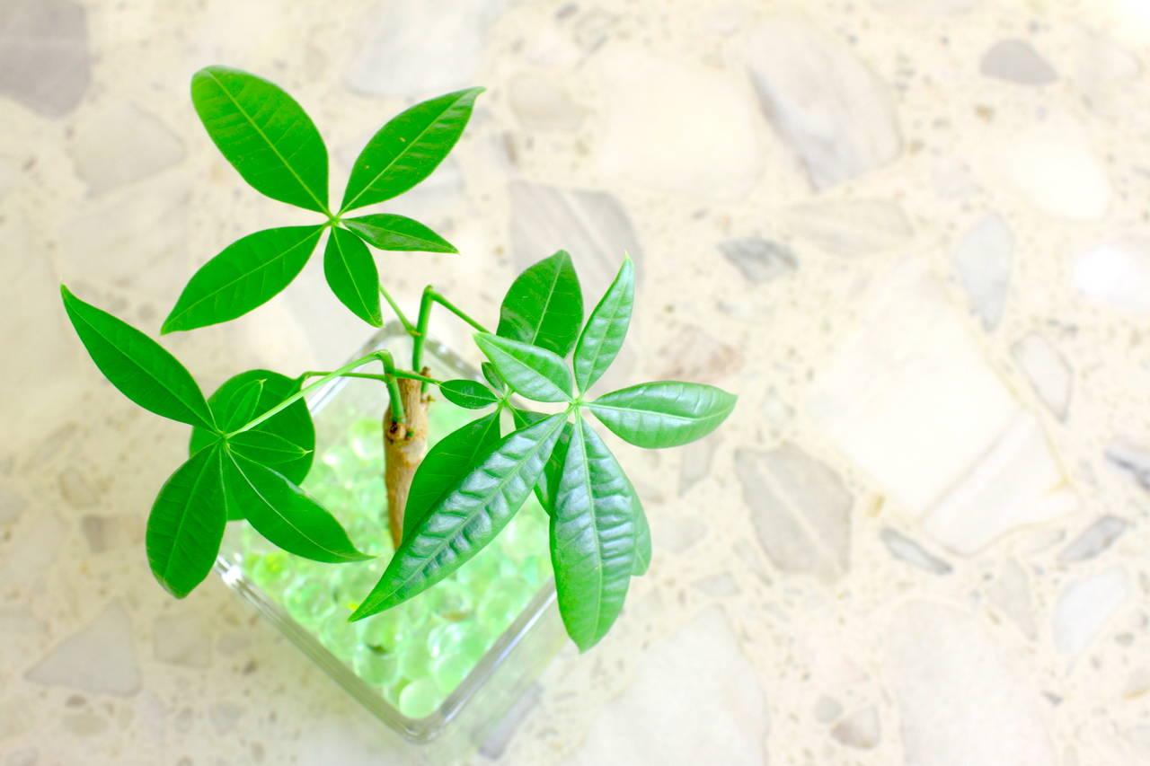 子どもと一緒に水耕栽培で観葉植物を育てよう!緑のある爽やかな生活