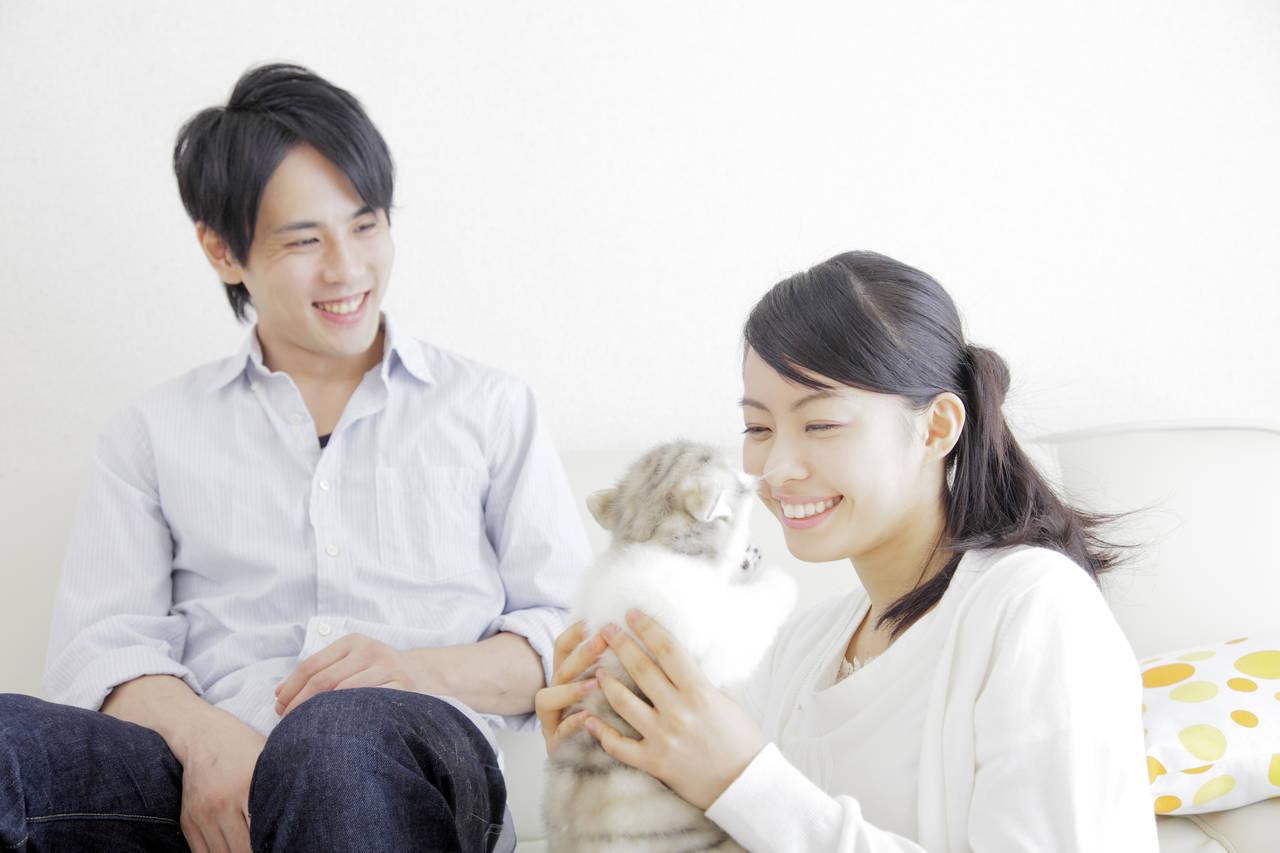 共働き家庭の猫はエアコンで快適に留守番!上手な使い方と節約の方法