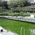 【東京・品川】家族向け屋外釣り堀「品川フィッシングガーデン」